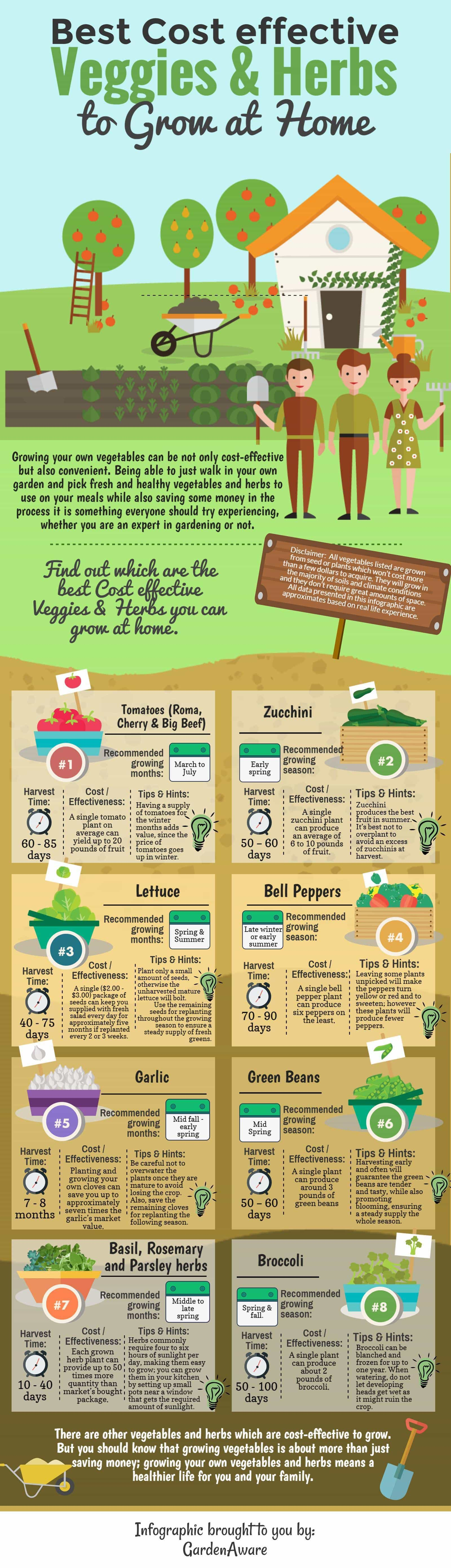 home gardening infographic