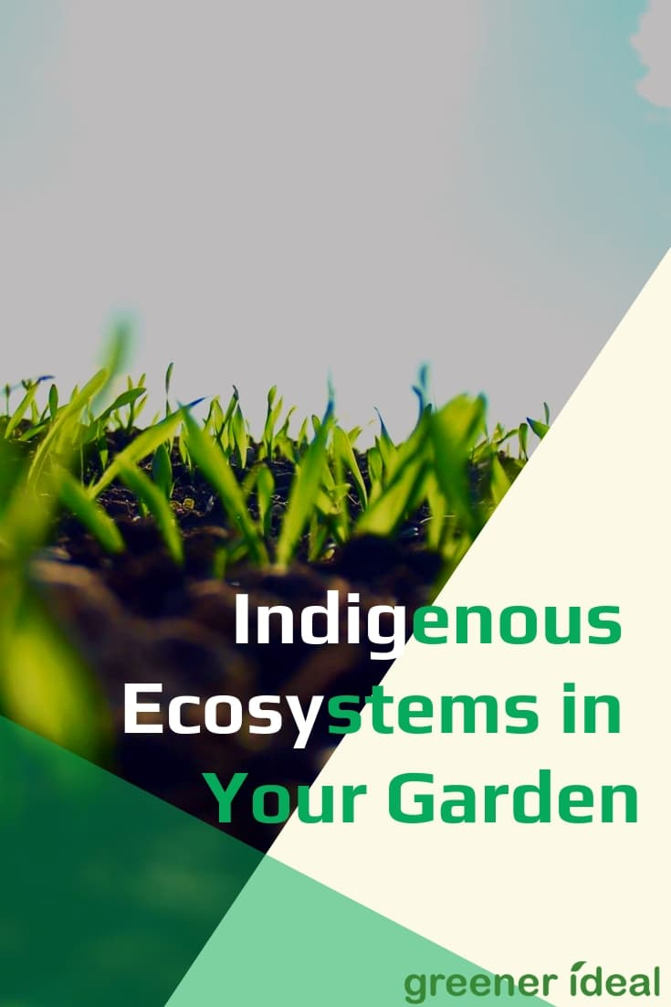 For those of us who have already established gardens, the fight against invaders seems impossible. Here are five reasons why maintaining, or restoring, a balanced and original ecosystem is better for everyone.